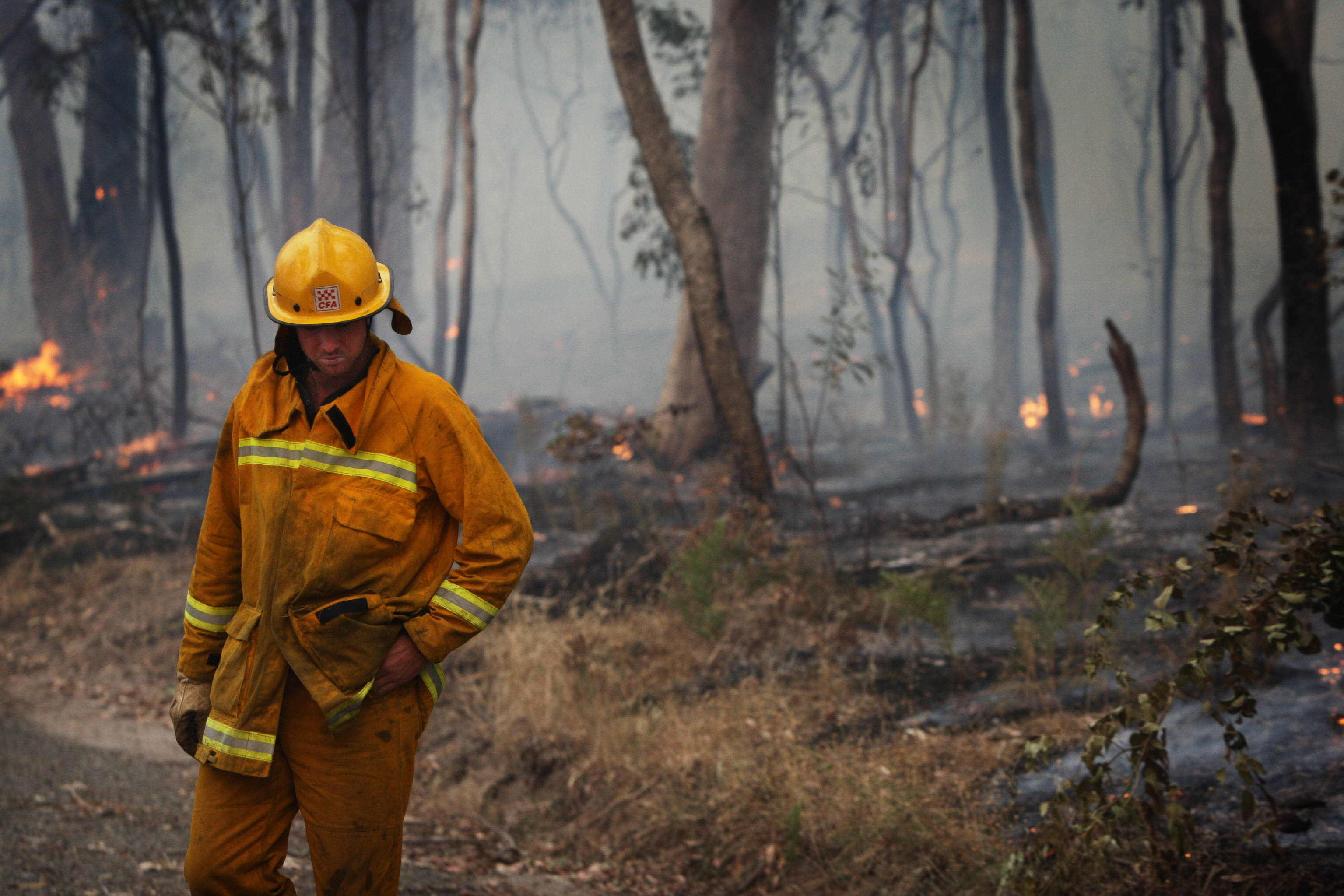 Faulty privatised power lines caused five of the worst Black Saturday bushfires